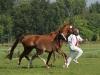 Familie van Lutterveld - Paarden